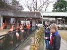 зоопарк с розовыми фламинго